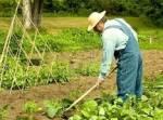 Сорняки как настоящее достояние огородника
