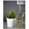 Растение фейка